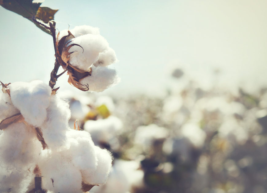 Trading Cotton - Commodity