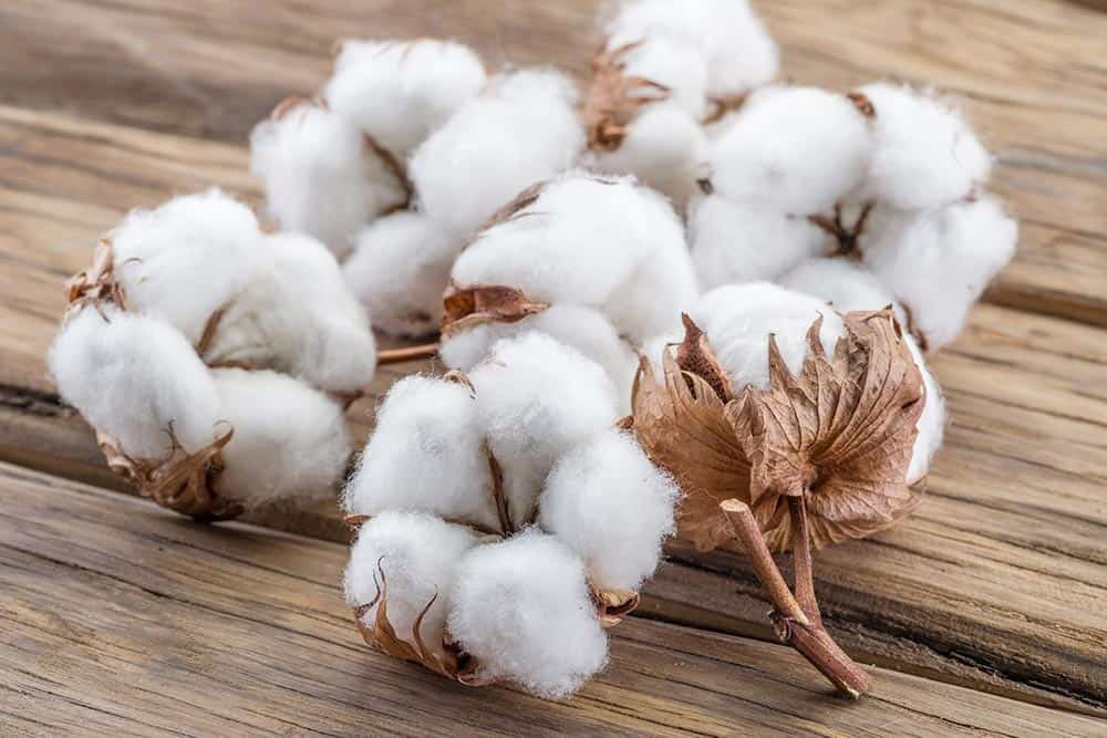 Cotton futures