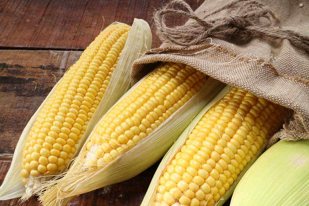 South African Corn prices
