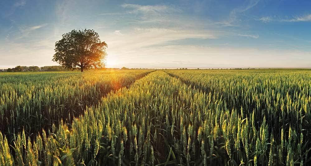 US wheat prices